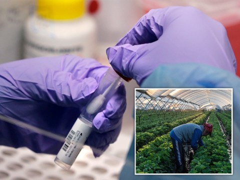 Mutant Covid strain from Spanish farm workers 'now accounts for most UK cases'