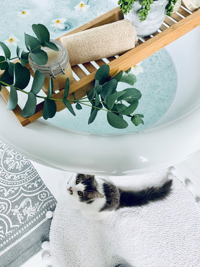 What I Rent: Vikki, £625 for a two-bedroom flat in Derby - chester the cat by the bathtub