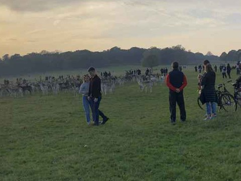 Dozens of wild deer 'trapped' by huge crowd of 100 people in Richmond Park