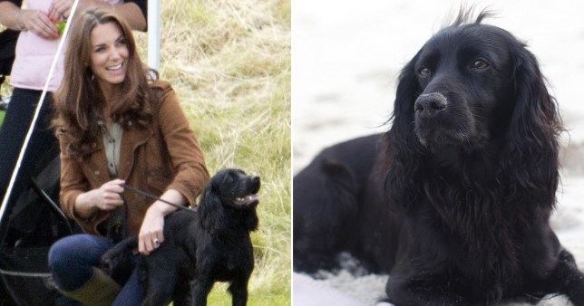 Kate and William's dog Lupo dies