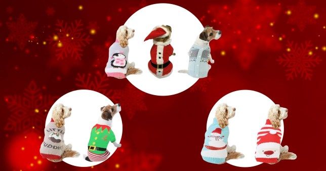 B&M's new Christmas outfits for dogs