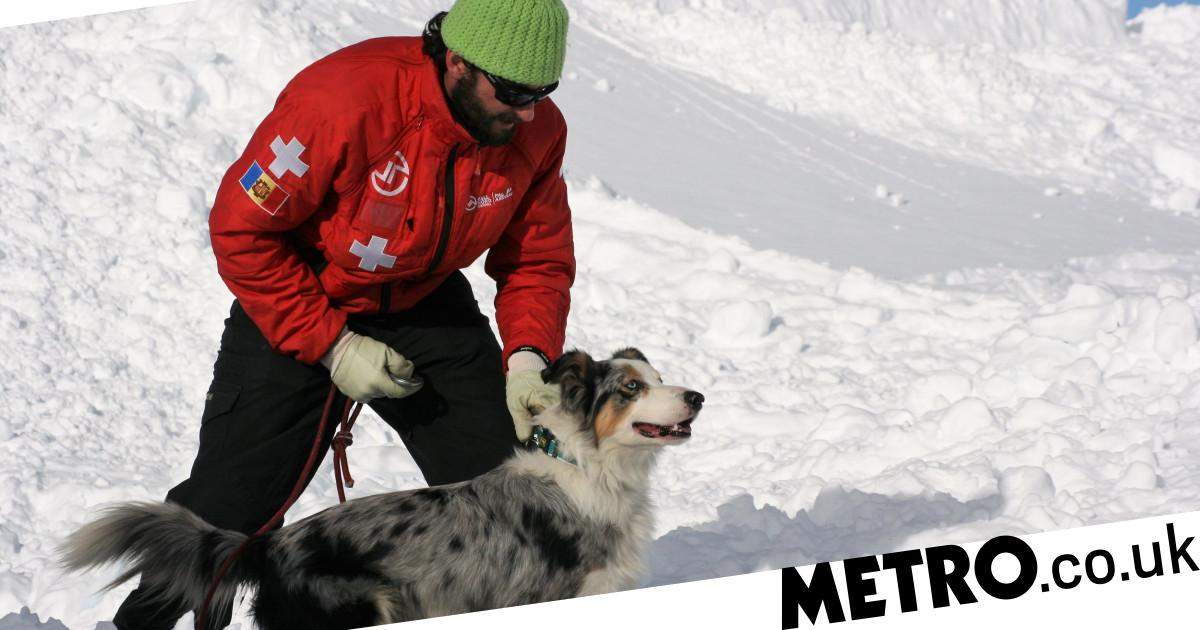 Meet the canine heroes that could rescue you in an avalanche