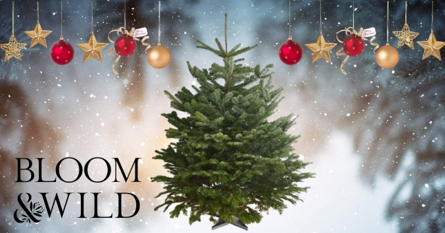 Bloom & Wild will deliver full-sized Christmas trees to your door