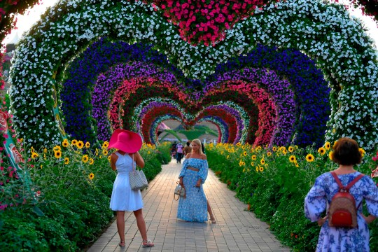 A woman poses for a picture in a flower tunnel at the Dubai Miracle Garden, the world's largest flower garden, in the United Arab Emirates, on November 11, 2020. - The Miracle Garden, home to giant floral structures and millions of flower and plant varieties, is open for visitors from November 1. (Photo by Karim SAHIB / AFP) (Photo by KARIM SAHIB/AFP via Getty Images)