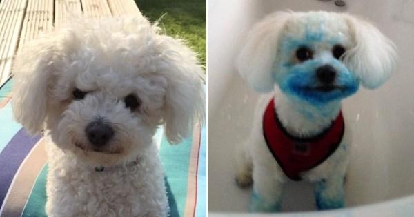 Dog eats ink cartridge Pics: Kenndy News & Media
