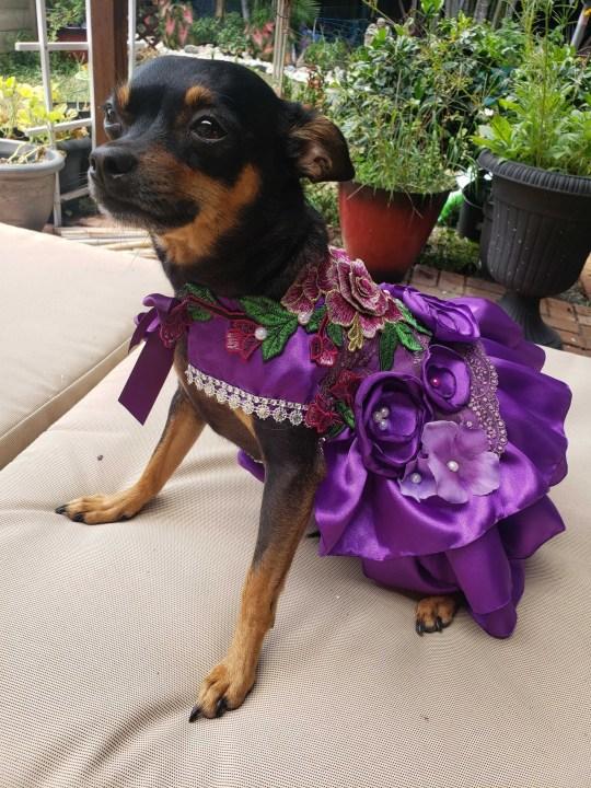 Presley in a purple dress