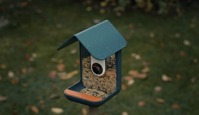 The Bird Buddy is currently raising funds on Kickstarter