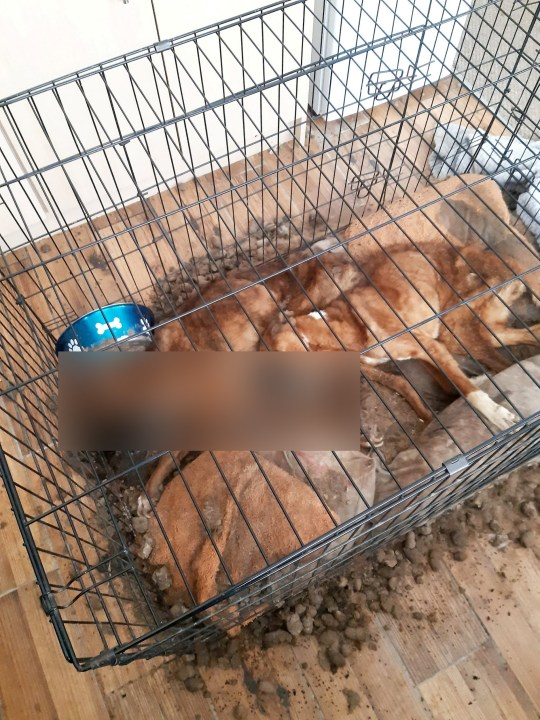 The two dogs were left to rot by the owner who didn't give them food and water