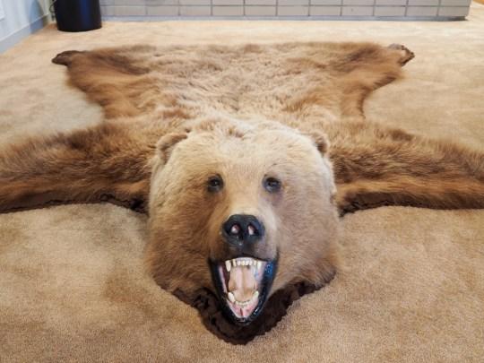 Bear fur pelt.