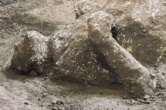 The casts of one of two bodies that are believed to have been a rich man and his male slave fleeing the volcanic eruption of Vesuvius nearly 2,000 years ago,