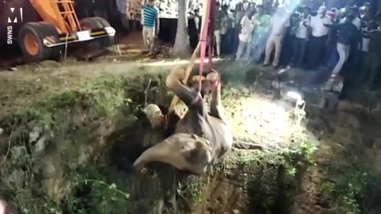 Massive elephant rescued by crane from a well in india Pics: SWNS