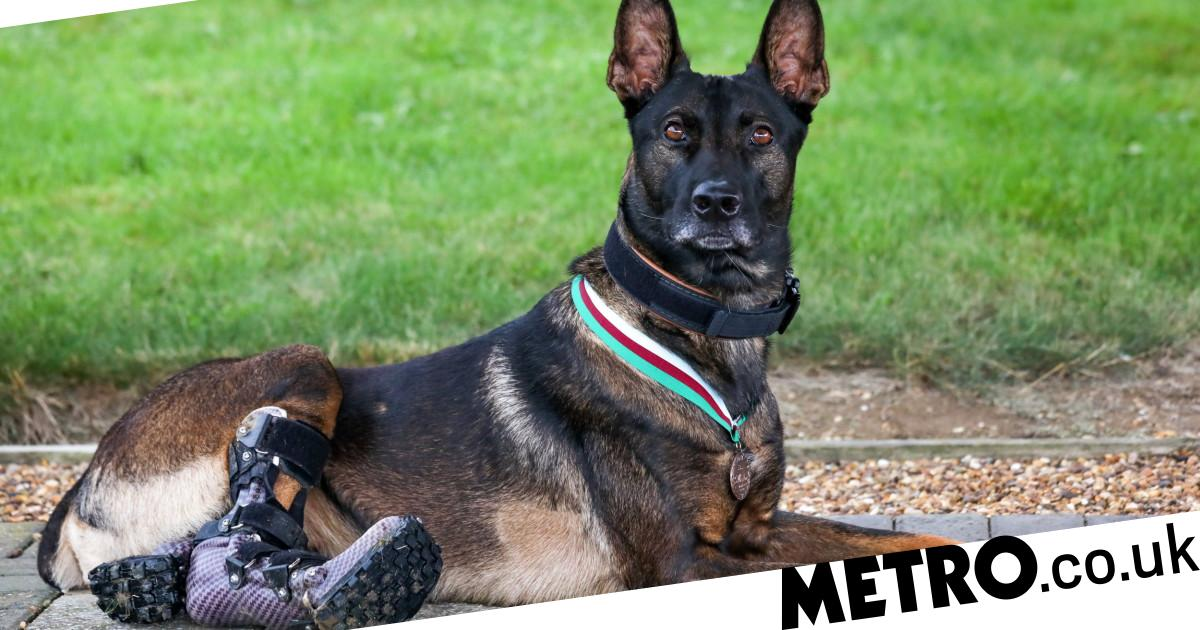 Hero dog who took out Al-Qaeda gunman awarded animals' Victoria Cross