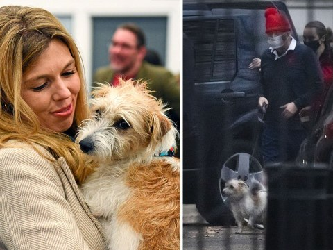 Boris's dog Dilyn believed to have caught Covid during No 10 outbreak