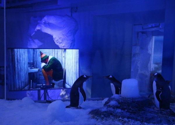 Gentoo penguins watching Christmas movies at the SEA LIFE Centre London Aquarium. PA Photo. Picture date: Monday November 30, 2020. The attraction has installed two TVs, showing Christmas films, outside the penguin enclosure to prepare them for the stimulation of guests returning on Wednesday. Photo credit should read: Yui Mok/PA Wire