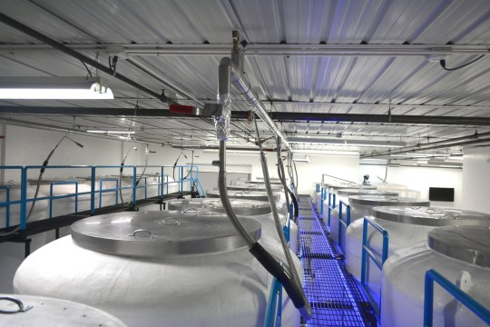 Cryonics Institute tanks filled with human bodies. SWNS story SWNYfroze; A woman whose dad was cryogenically frozen after death has decided to be frozen with him, so they stand a chance of being revived together in the future. Debbie Fleming, 55, is even planning to have her dog Sherry frozen - so they might all be ???reunited