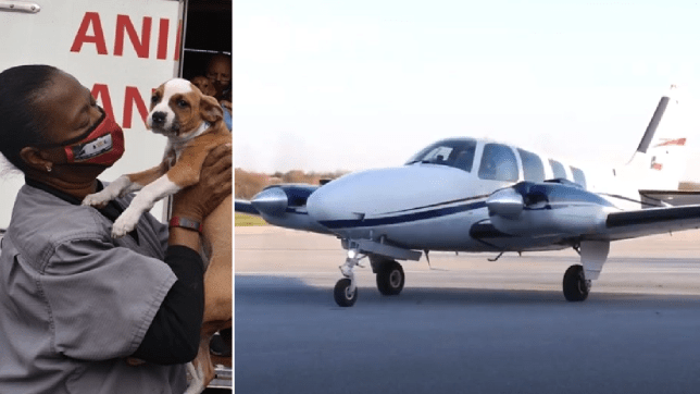 Puppy and plane