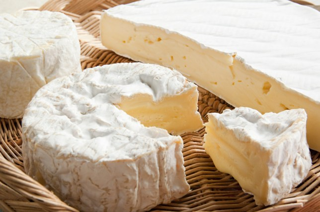 Camembert and brie cheeses