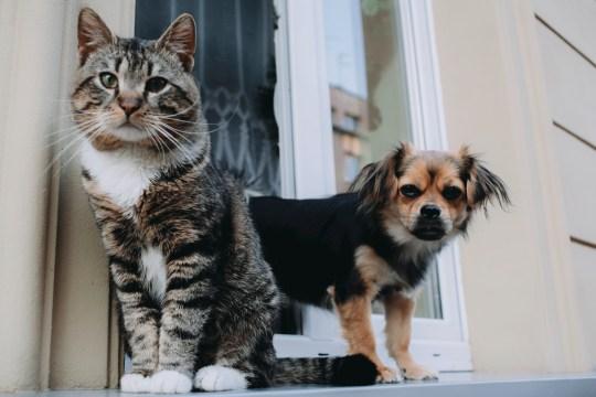 Cat and dog on a windowsill