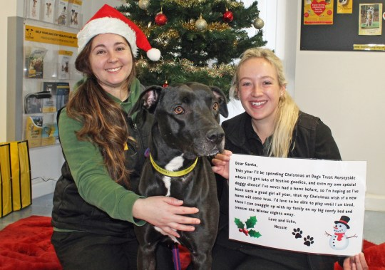 Nessie a four-year-old Lurcher with her Christmas letter