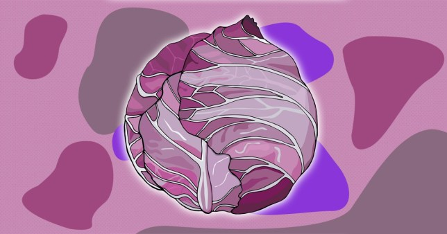 illustration of red cabbage