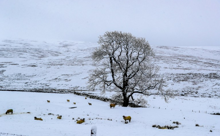 Snow covered trees at Newby Head, North Yorkshire (Picture: PA)