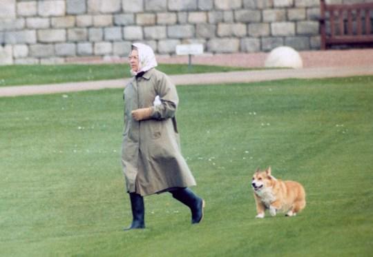 Queen Elizabeth II with a corgi at Windsor