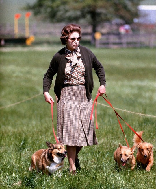 Young Queen Elizabeth II with some of her corgis