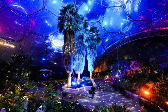 ST AUSTELL, ENGLAND - DECEMBER 03: A musician rehearses for a live performance of festive music under the Christmas lights installation in the Mediterranean biome at the Eden Project on December 3, 2020 in St Austell, England. (Photo by Hugh Hastings/Getty Images)