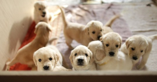 BBC defends Will My Puppies Make Me Rich? after petition to stop show reaches 18,000 signatures PICS: Getty