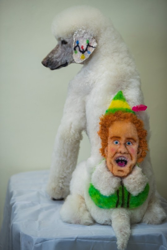 Ira the 10-year-old poodle with Christmas character - Buddy the Elf Will Ferrell, New York, USA - dyed into his fur