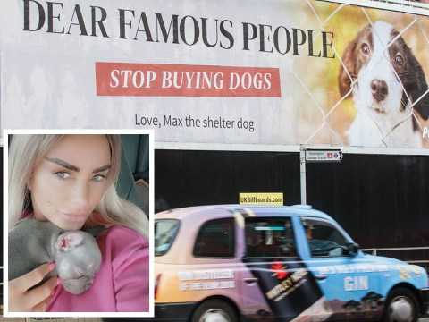 Celebs under fire over designer puppies as animal shelters 'overflow' with unwanted pets