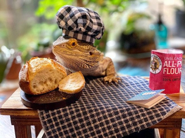 lenny the lizard with tiny bread