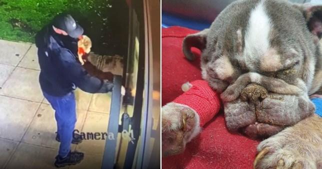Dying dog dumped