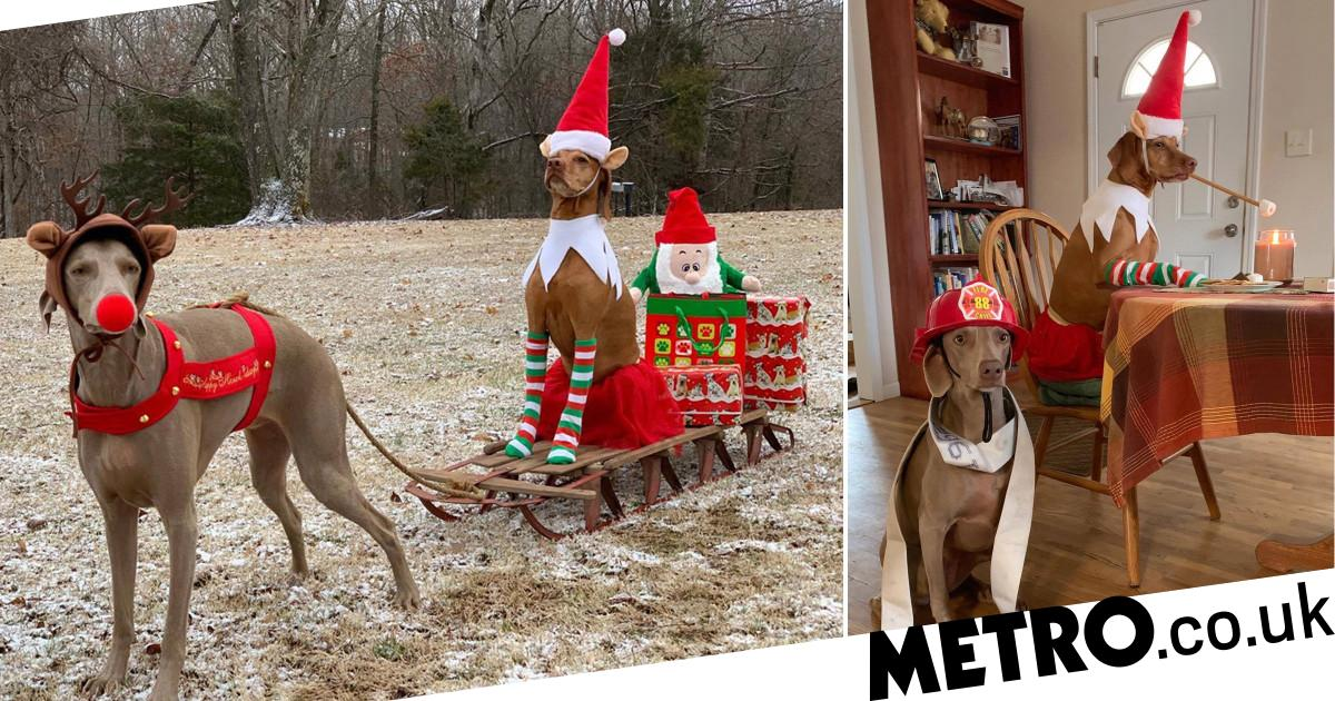 Woman creates hilarious elf dog snaps with her two pooches