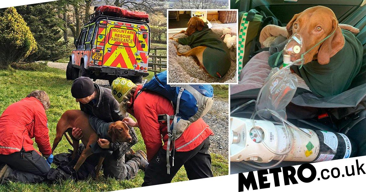 'Lucky lad' Walter survives 150ft fall from cliff