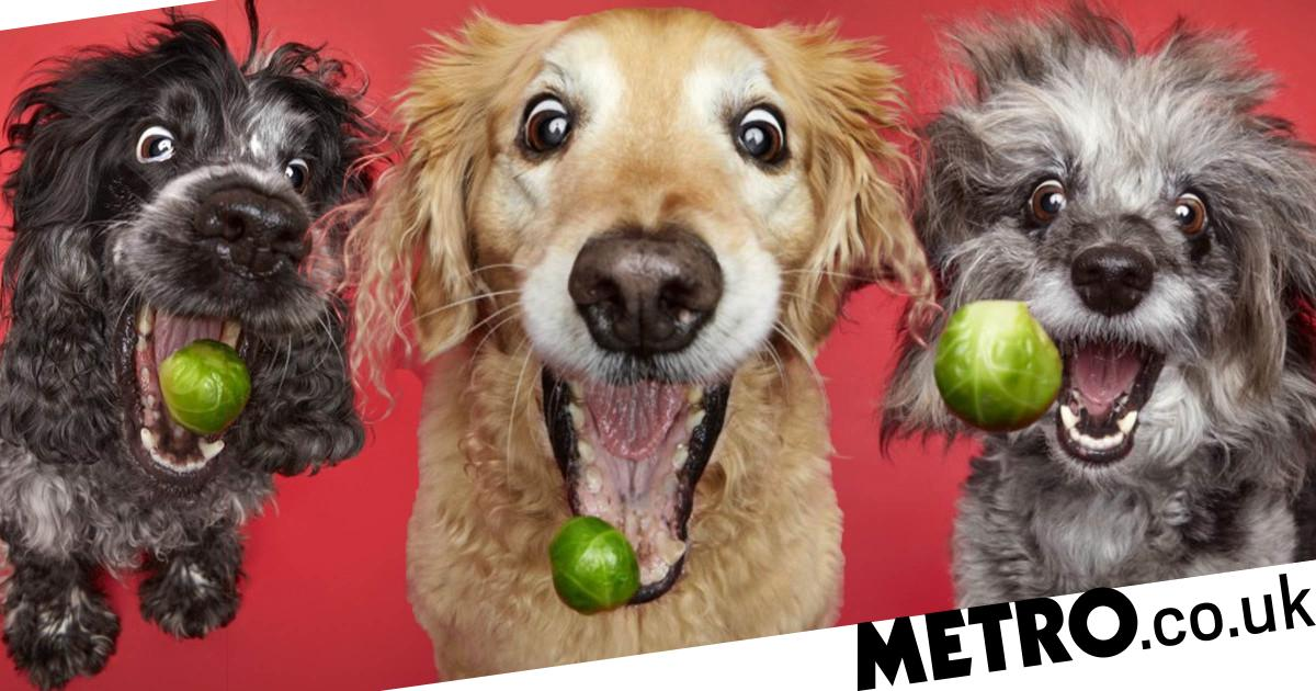 Hilarious photos of dogs catching Brussels sprouts will make you smile
