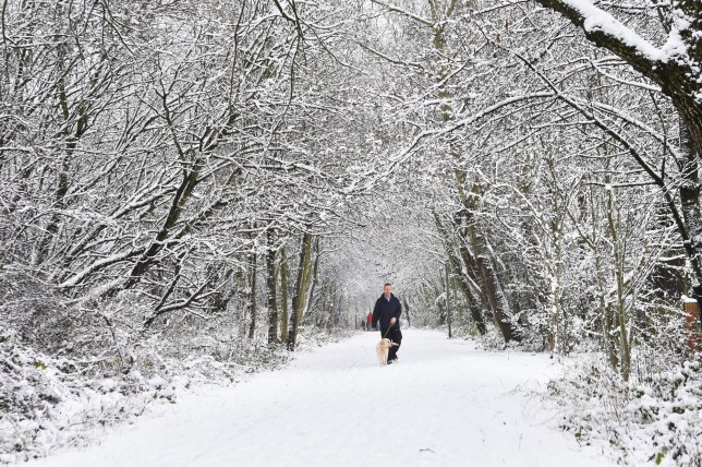 NEWCASTLE-UNDER-LYME ENGLAND - DECEMBER 29: A man walks a dog while at Silverdale Country Park on December 29, 2020 in Newcastle-Under-Lyme, England. Heavy snow fall has covered the West Midlands as the Met Office has issued yellow warnings throughout the day. (Photo by Nathan Stirk/Getty Images)