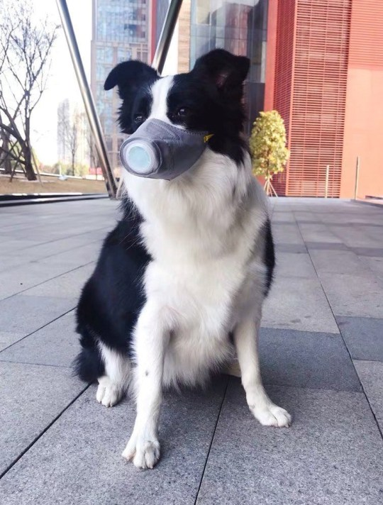 A dog wears a mask from Pet Masks.