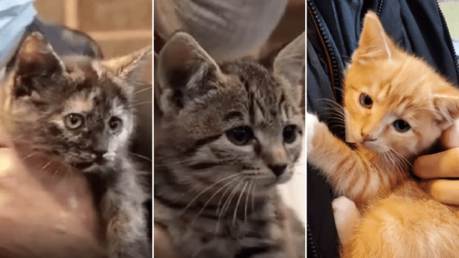 Kittens saved from crusher