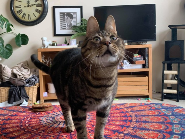 Peanut the cat with a wonky face (Picture: Sydney Benham)