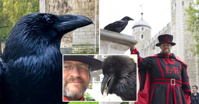 Britain 'could fall' as Tower of London's 'Queen' raven is feared dead
