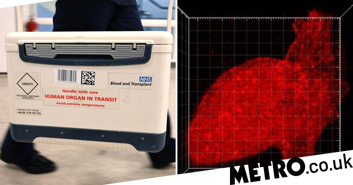 New technique could create lab-grown functional organs for transplant - Metro.co.uk