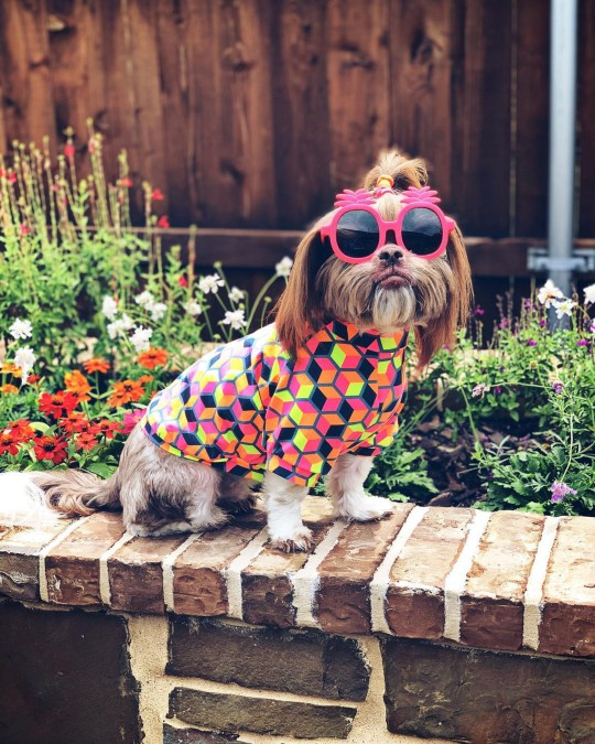 Ducky in sunglasses