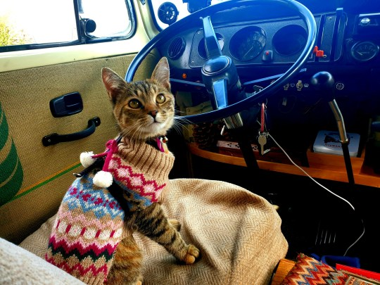 Aimee the cat. See SWNS story SWSYmexico. A Brit couple have spent months trapped in Mexico through the coronavirus pandemic - because they can't bear to abandon their rescue CAT. Lee Hodges, 33, and his partner, Willow Rolfe, 29 set off for America in August, 2019, and headed south to Mexico in February when their visas were nearing their end. While in Washington DC, the pair of teachers from Birmingham rescued a cat, Aimee, from an animal shelter, and spent the rest of their trip tending to their new pet. When the pandemic began to spread they wanted to return home but they couldn't bare to leave their cat behind, so decided to stay.
