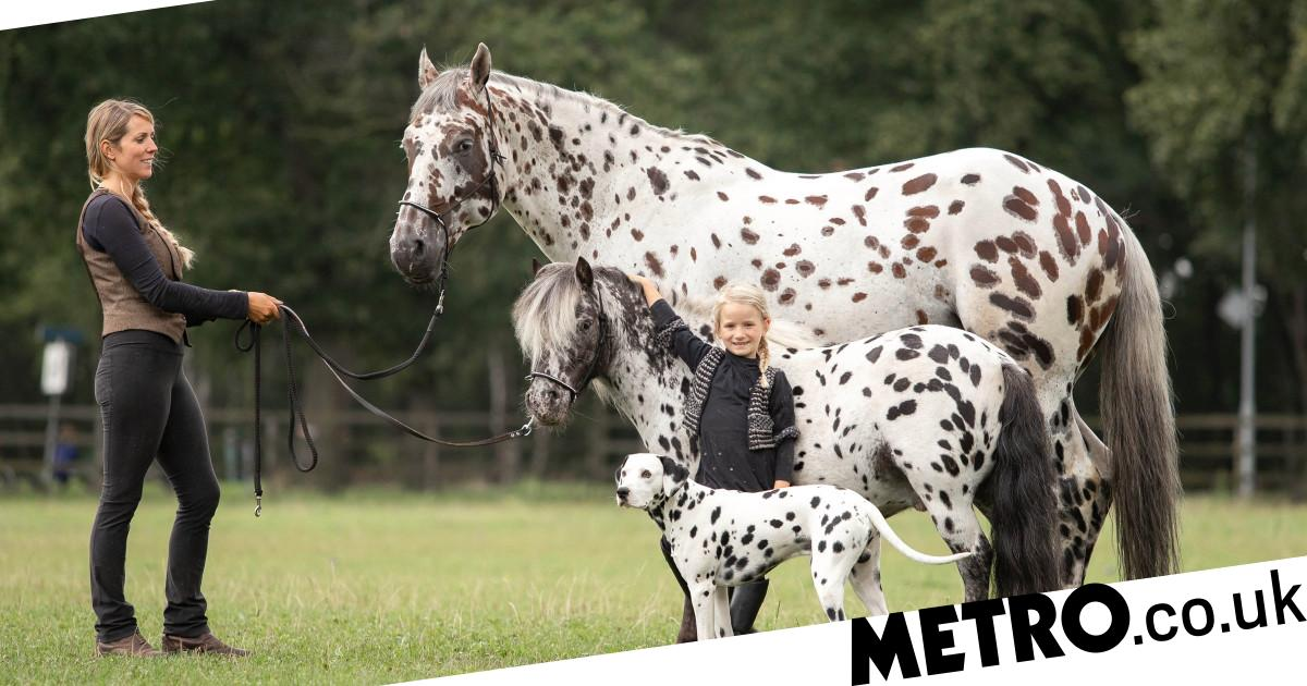 Horse, dog and pony are best friends and look like siblings