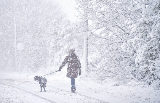 A dog walker braves blizzard conditions in Gateshead