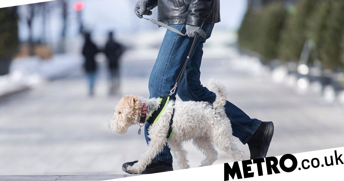 Woman fined after walking husband on a lead and telling police he was a dog