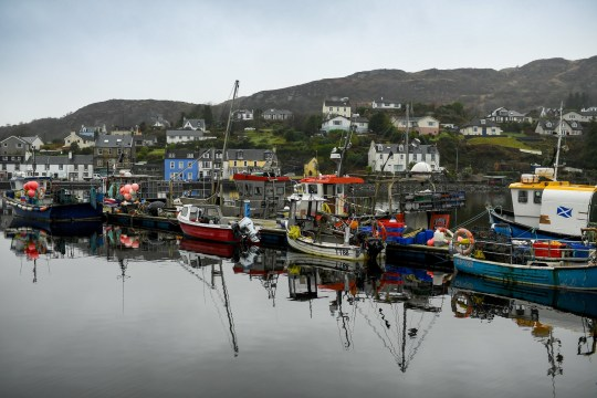 Fishing boats tied up at Tarbert Harbor in Scotland today