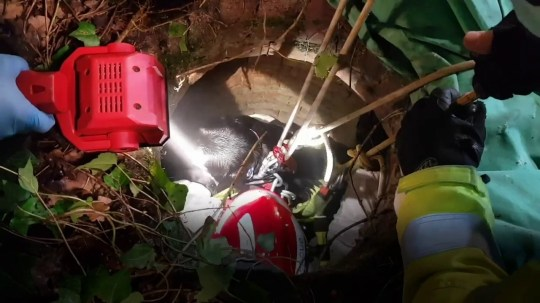(Picture: Hampshire Fire and Rescue Service) The seven-year-old canine, named Willy, accidentally fell down the well last night (Thursday 14 January) in a woodland near Boyatt Lane, Eastleigh. Willy?s owner, Roger Bacon, found his beloved pet after hearing his barks coming from the pit. The pair ? along with Roger?s second dog ? had been out for their usual evening walk when Roger realised Willy was no longer in tow. Roger searched the woodlands, following Willy?s cries, to find the opening concealed by ivy. The well that Willy was trapped in was deep and cramped, and he could be heard splashing in water at the bottom.