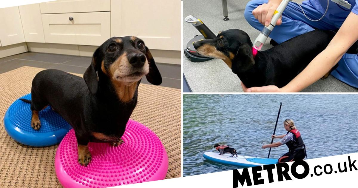 Paralysed sausage dog recovers thanks to pilates and paddleboarding
